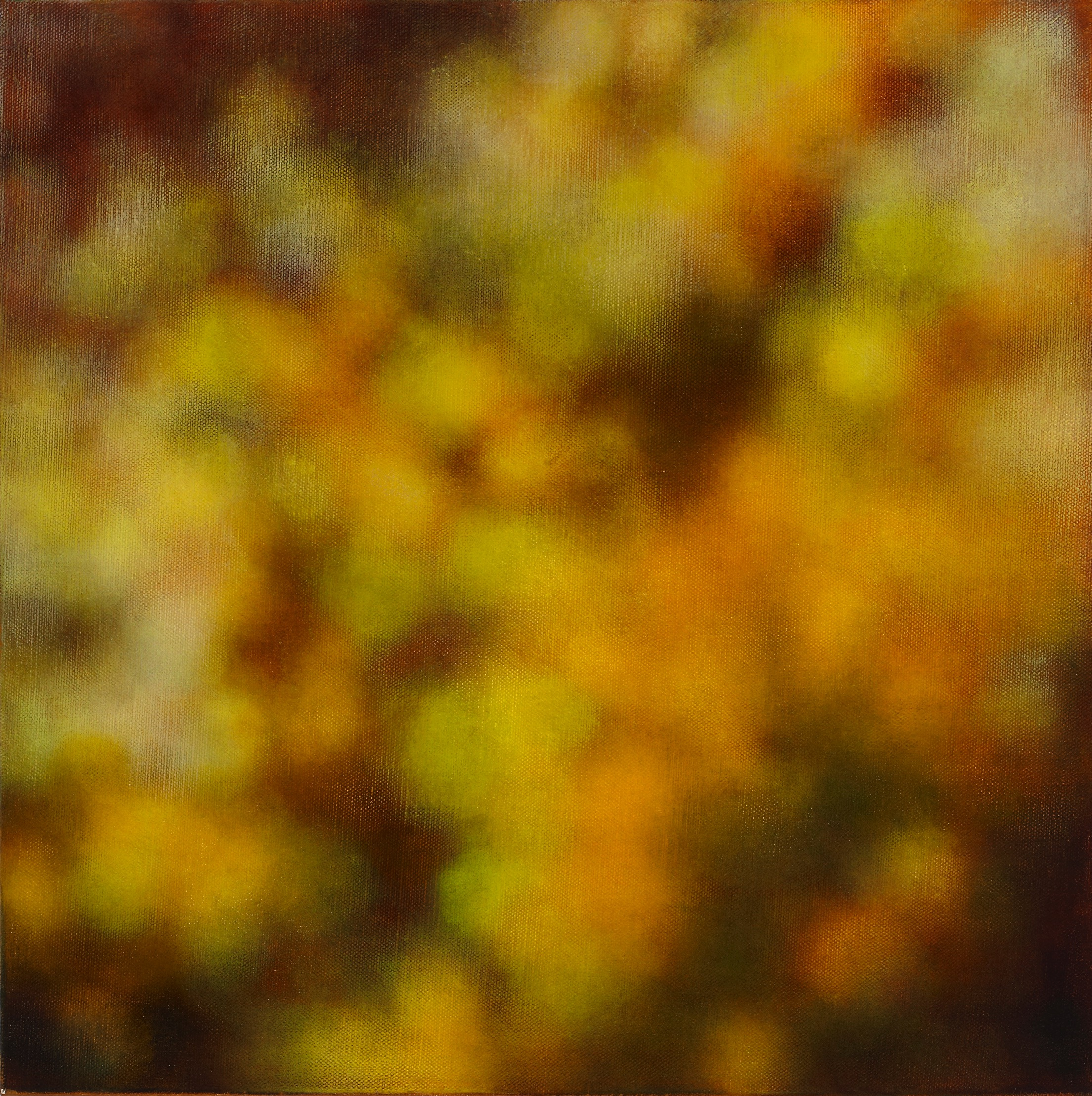 Wattle's light, 2010, oil on canvas, 61x61cm