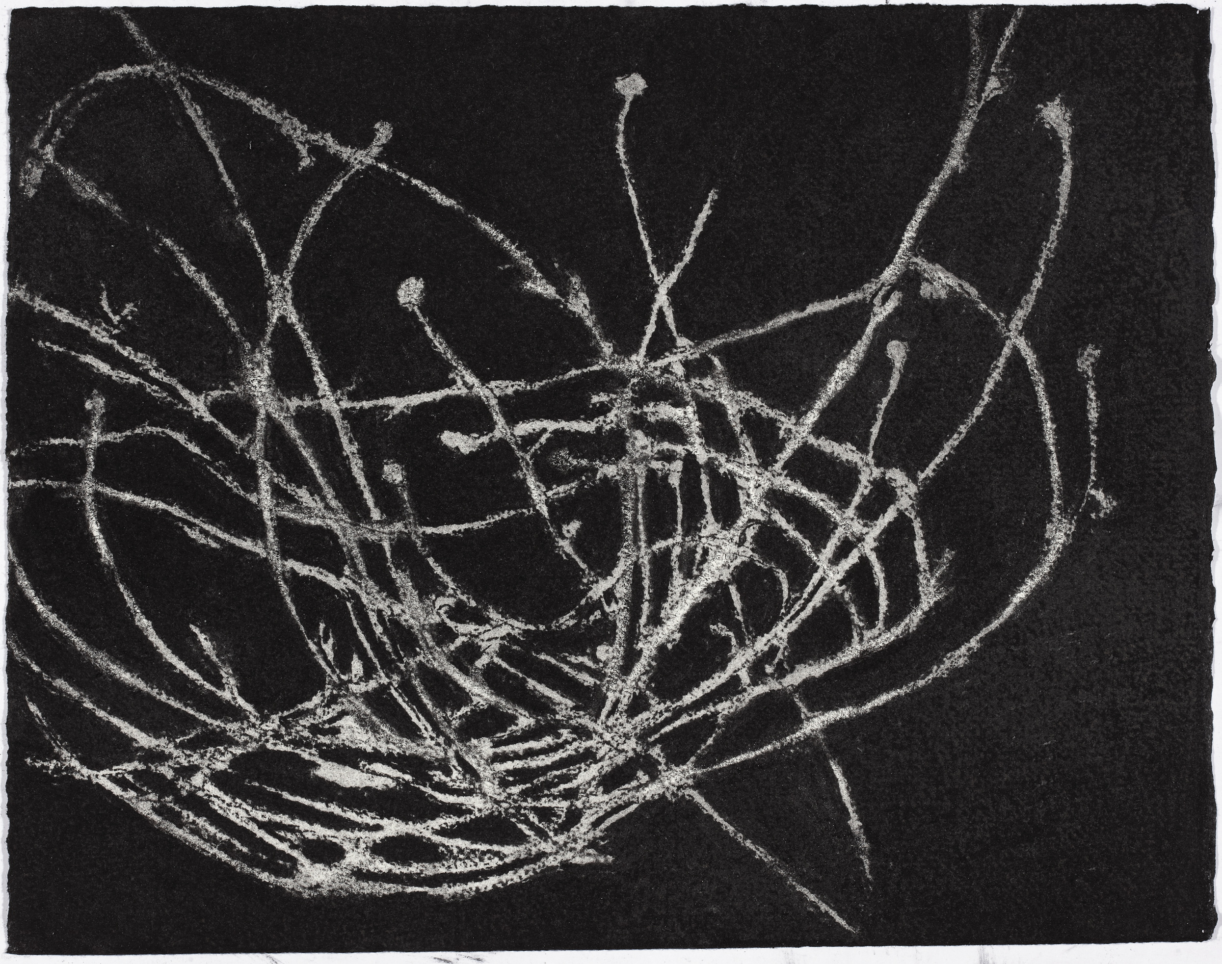 NSW desert plant (detail), 2011, charcoal on white paper, 25.6x33.0cm
