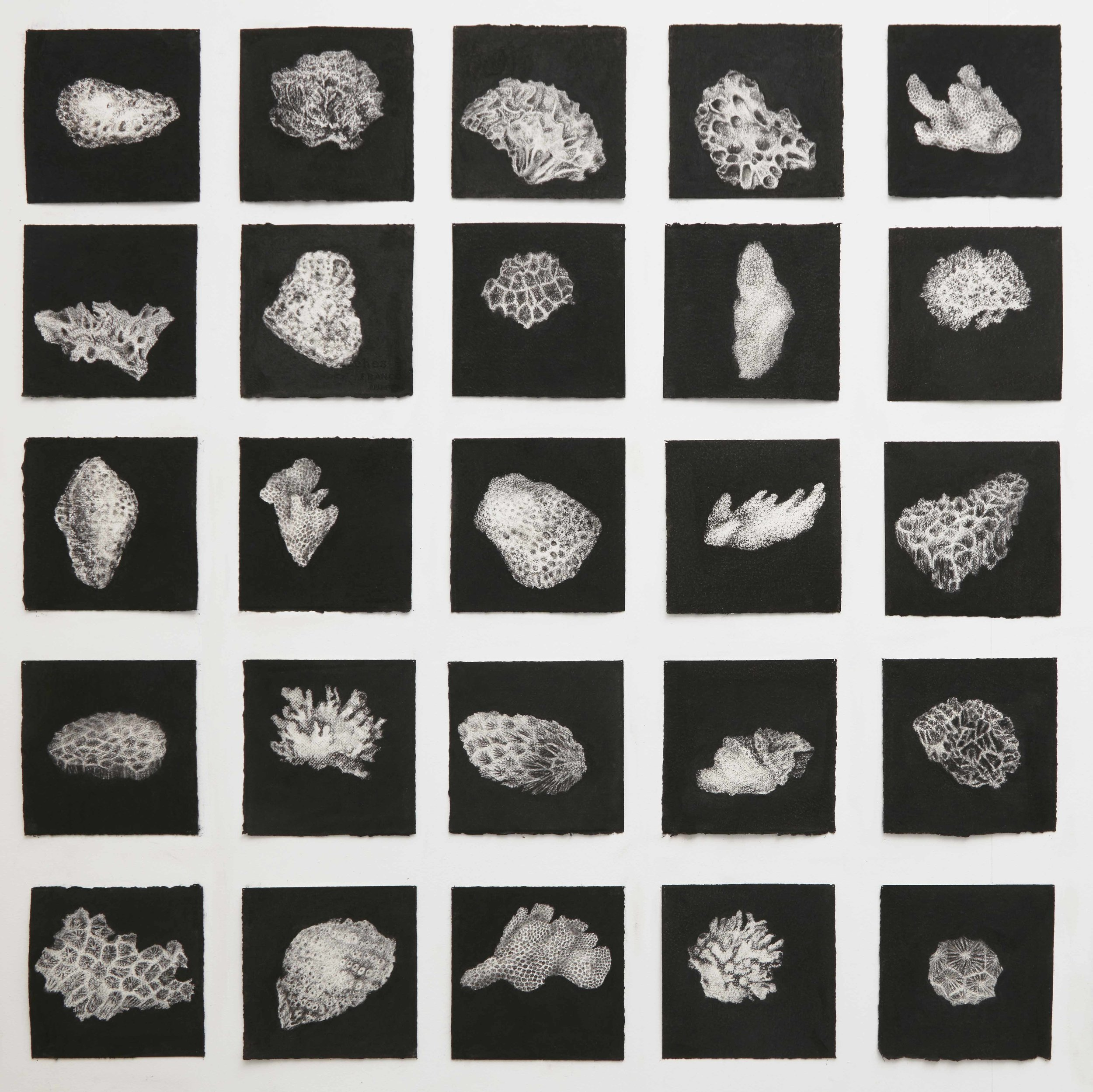 Twenty five corals, 2014-2015, charcoal on twenty five sheets of white paper; 19 x 19 cm each sheet (installation size variable), installation image Glasshouse Port Macquarie Regional Gallery 2016