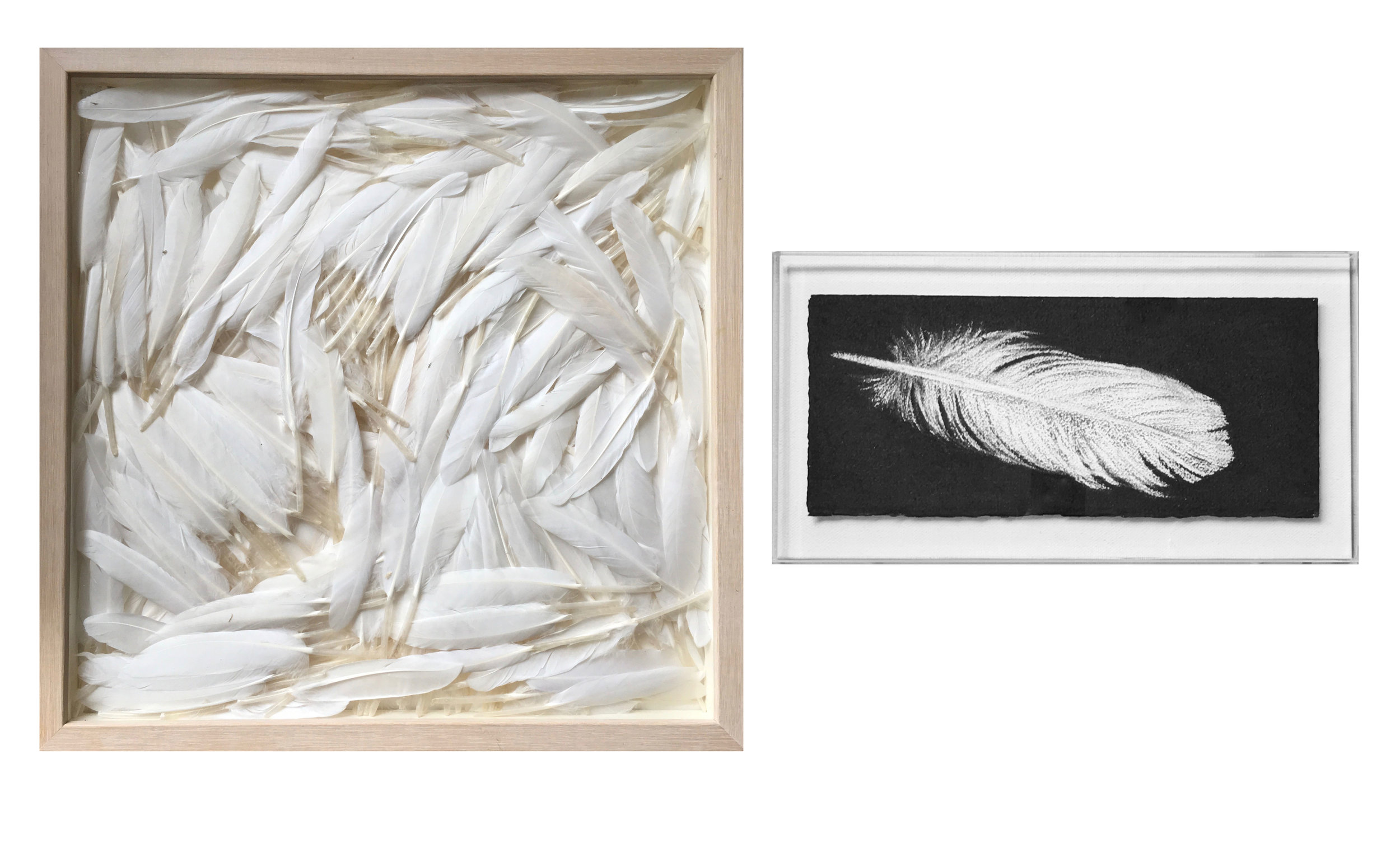 Pollyxenia Joannou, Flight, 2016, 38x38cm framed, feathers  Jennifer Keeler-Milne, Feather, 2016, 31x13.5cm, 36x19cm framed, charcoal on paper