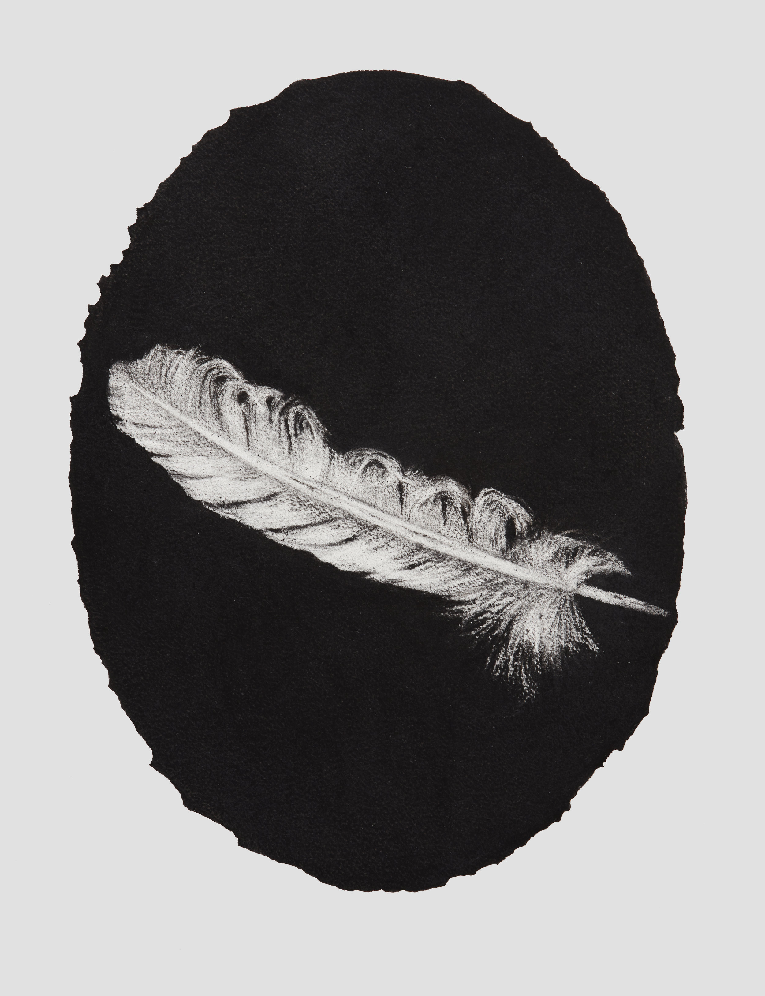 portrait feather, 2017, 44x33cm, charcoal on paper