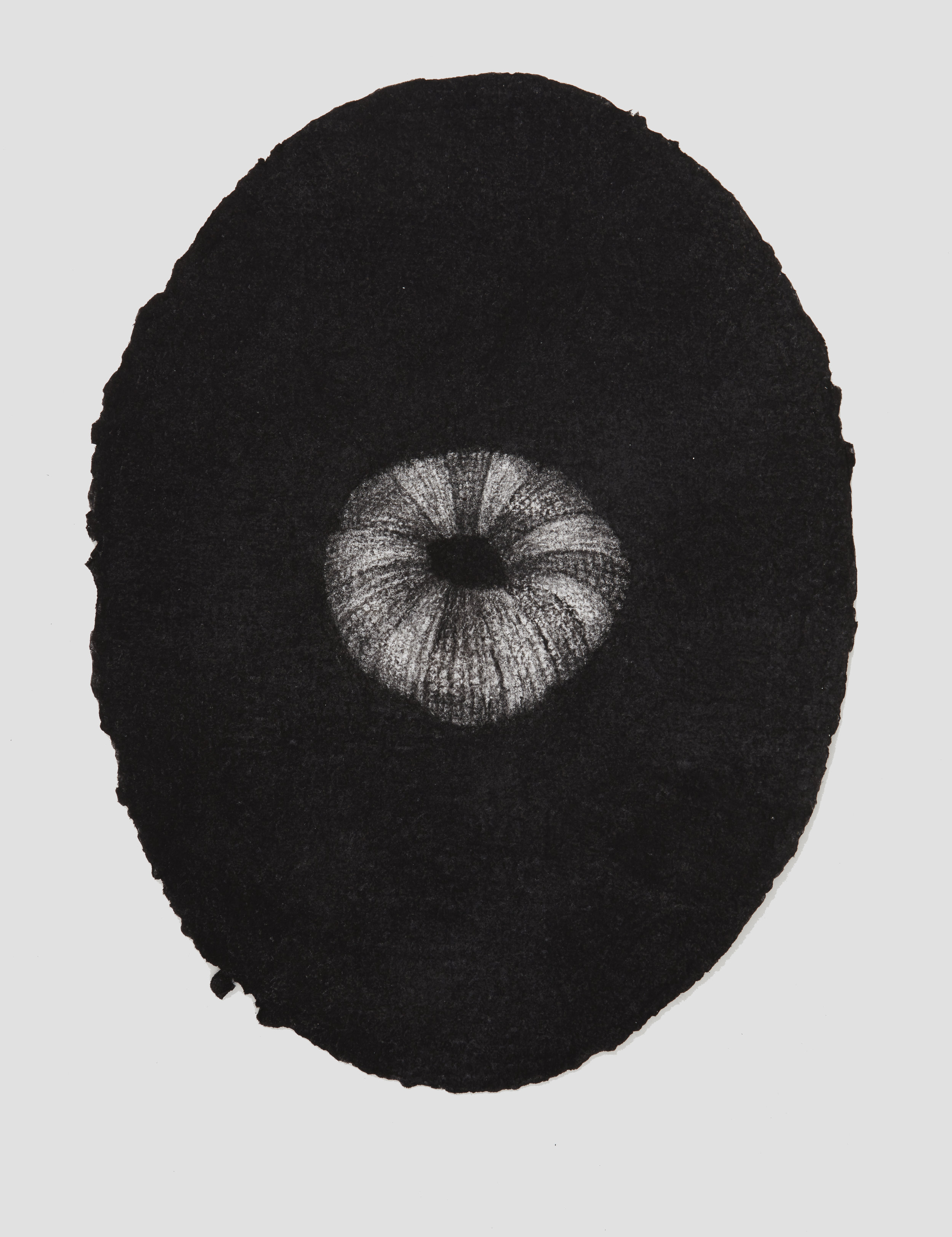 portrait urchin, 2017, 44x33cm, charcoal on paper