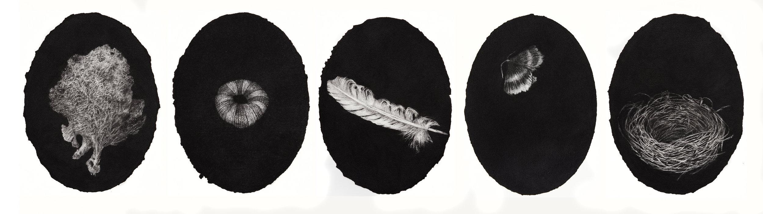 portrait suite, 2017, charcoal on paper