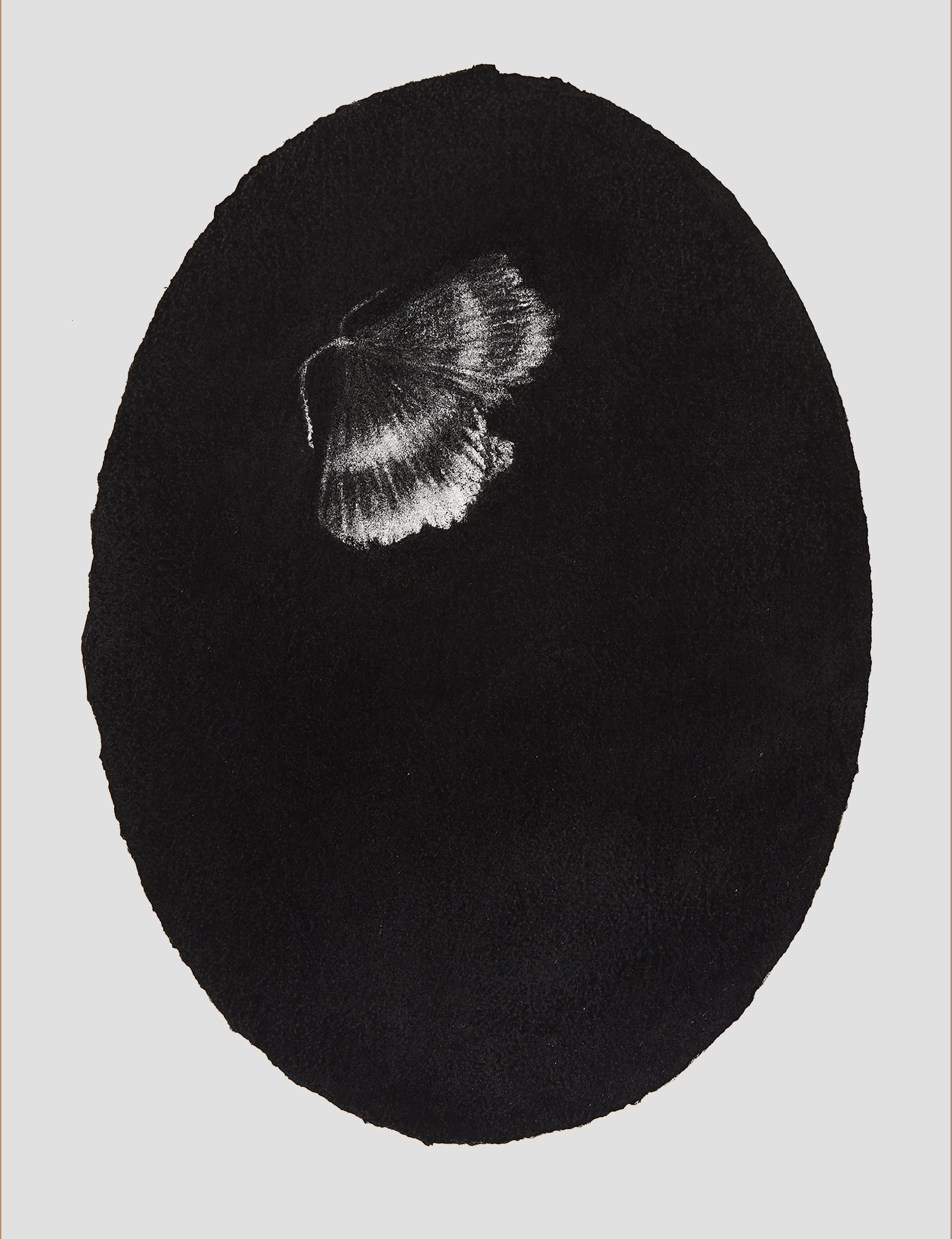 portrait moth, 2017, 44x33cm, charcoal on paper