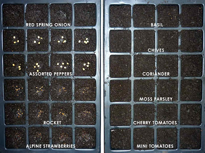 seeds%2Bwk1.jpg