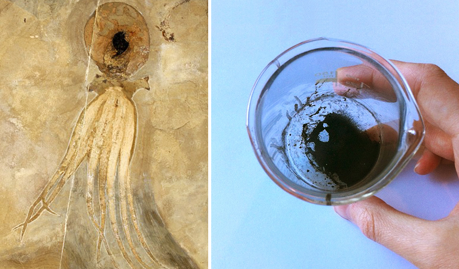 95 million year old octopus fossil found in 2009 and it's ink, extracted by paleontologist Jørn Hurum and then . The piece is exhibited together with the fossil in the Natural History Museum in Oslo, Norway. ink as used in Esther Van Hulsen's octopus illustration as seen above.