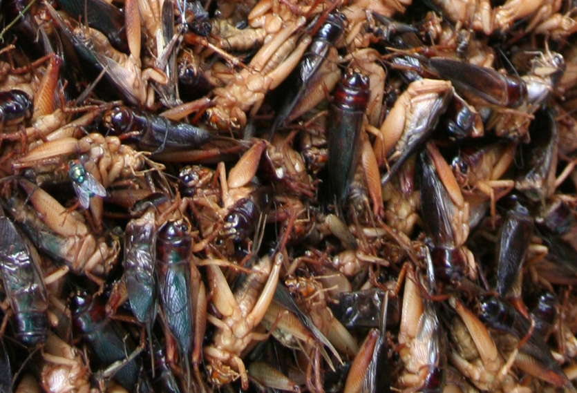 Crickets+05+2006+cropped.jpg