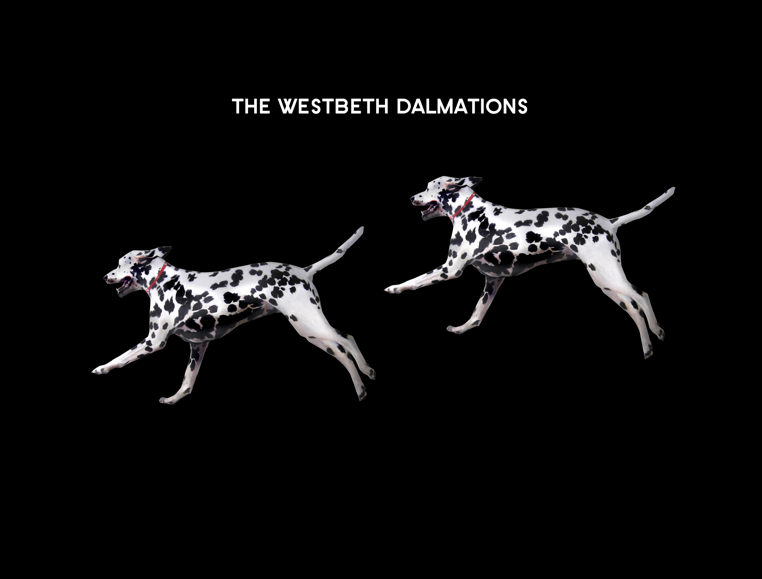 Dalmationblk.jpg