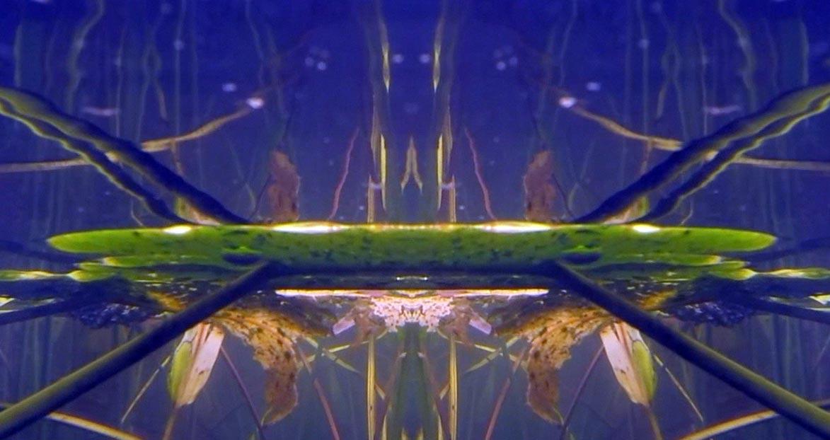 Pilgrim-Pond-Pyramid-18.jpg