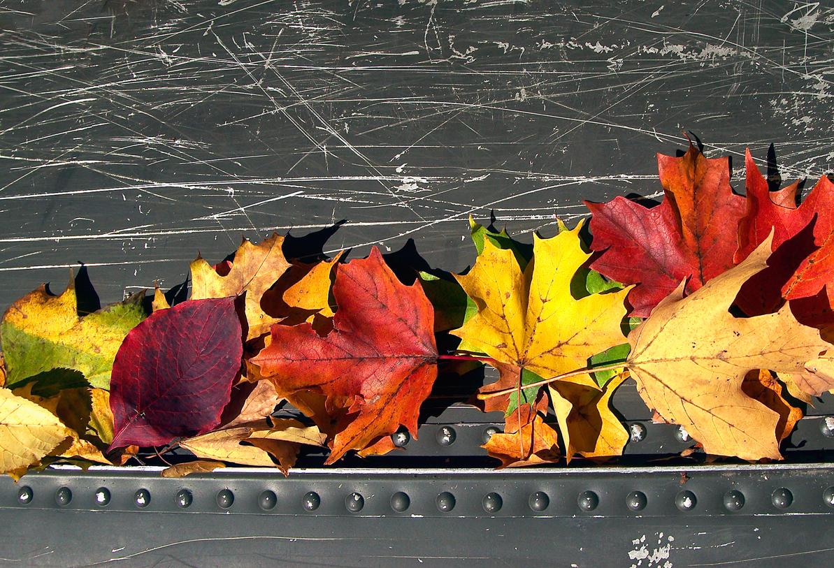 leaves_canoe3.jpg