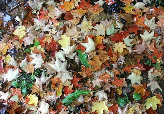 leaves_cropped.jpg
