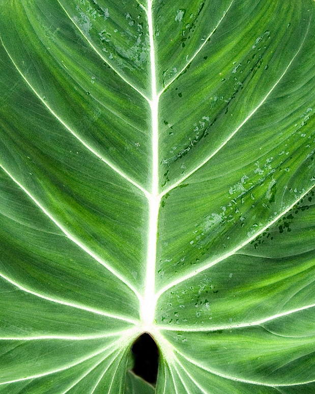 leaf9.jpg