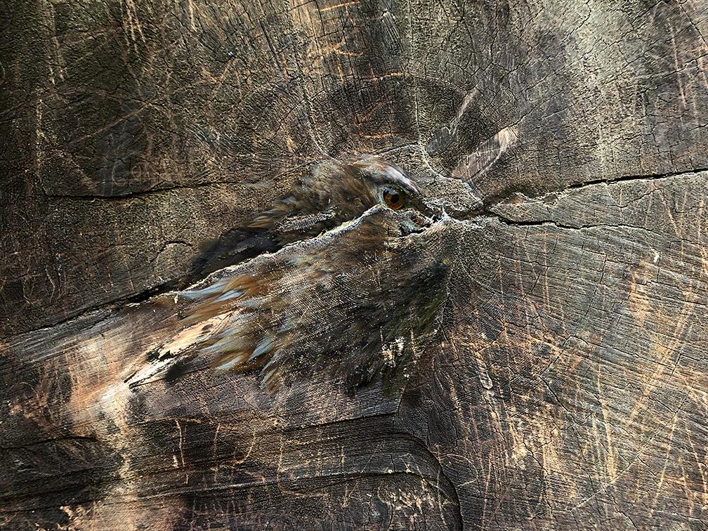 Bird Stump CAA.jpg