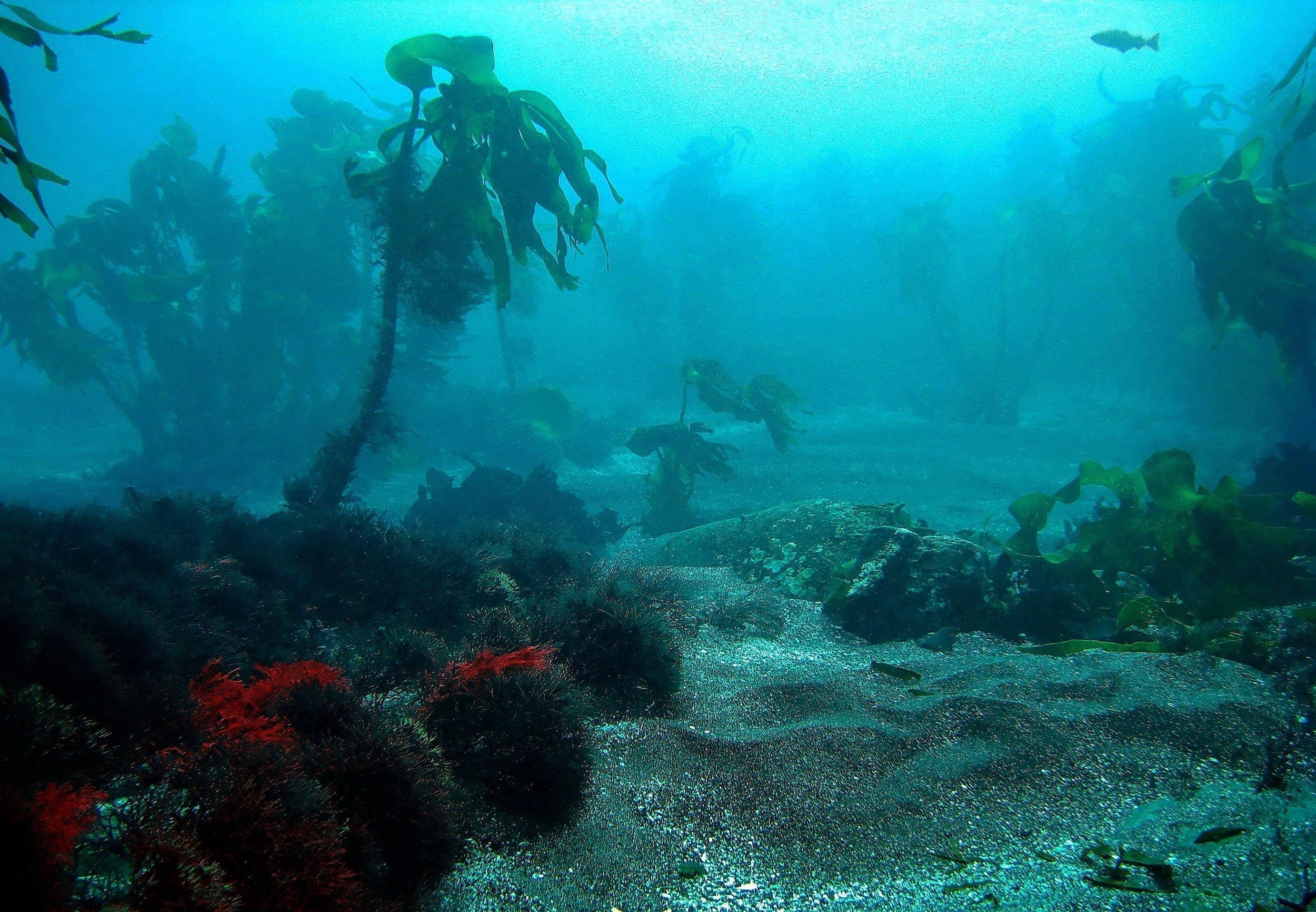 Surreal scenery: Ten meters below the water line