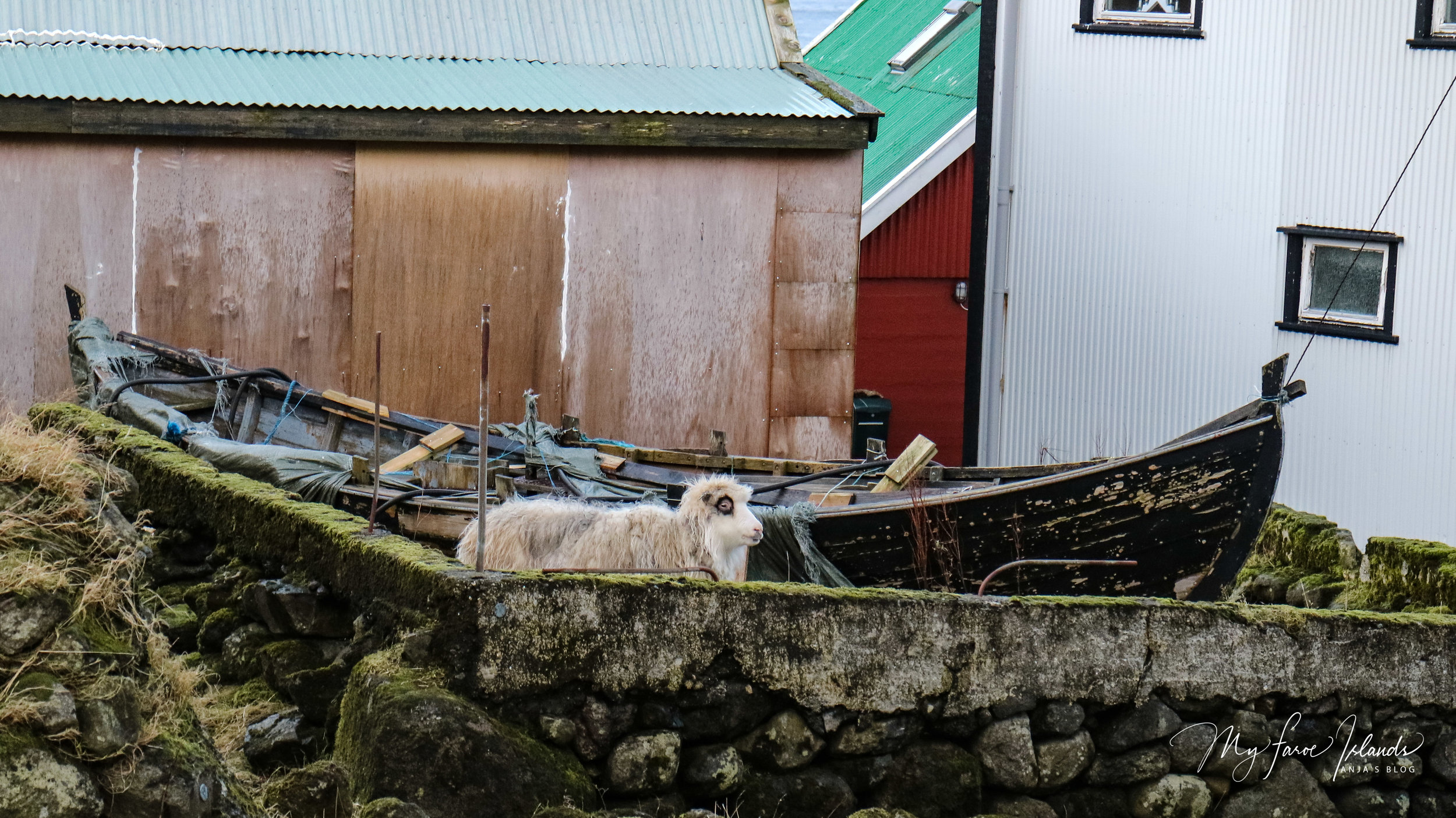 Sheep Boarding 3 © My Faroe Islands, Anja Mazuhn  (1 von 1).jpg