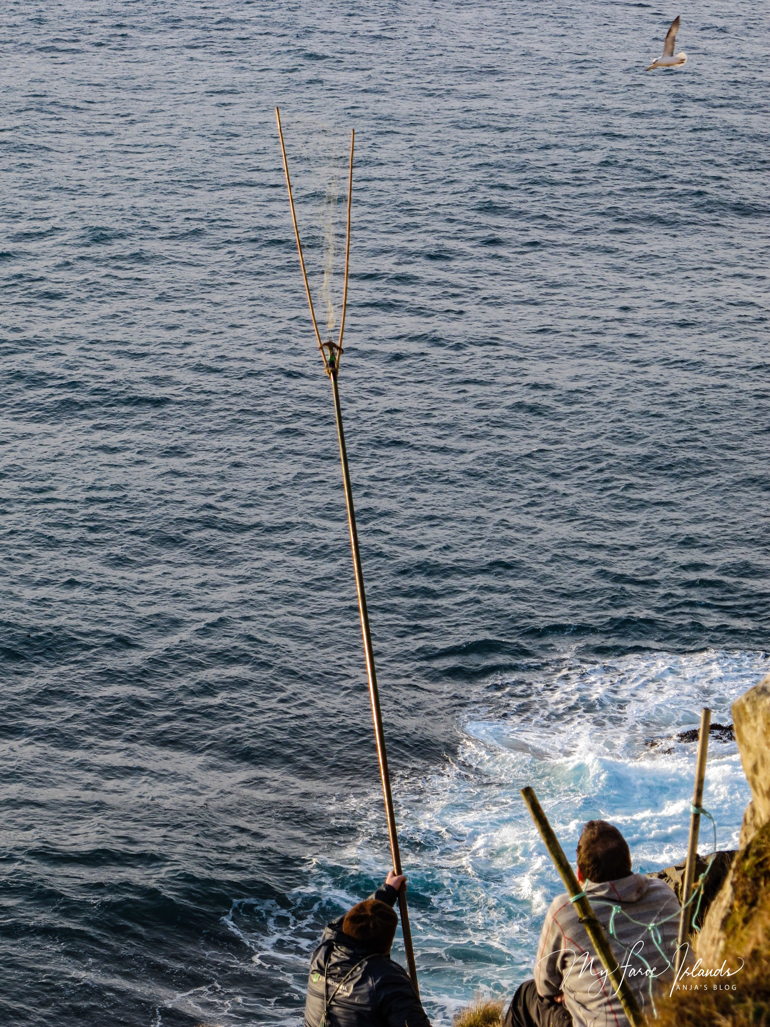 Bird Catching 3 ©My Faroe Islands, Anja Mazuhn  (1 von 1).jpg