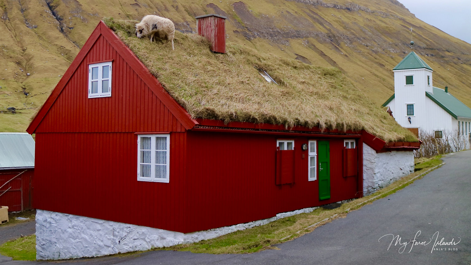 Sheep+on+a+shaggy+grass+roof+© My+Faroe+Islands+-+Anja+Mazuhn++(1+von+1).jpg