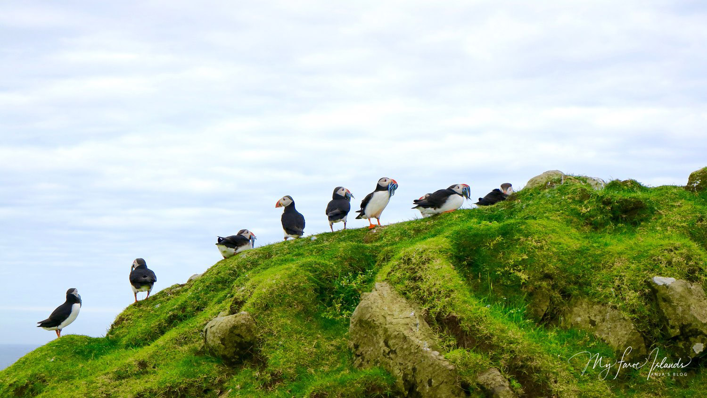 Puffins  © My Faroe Islands, Anja Mazuhn  (1 von 1).jpg