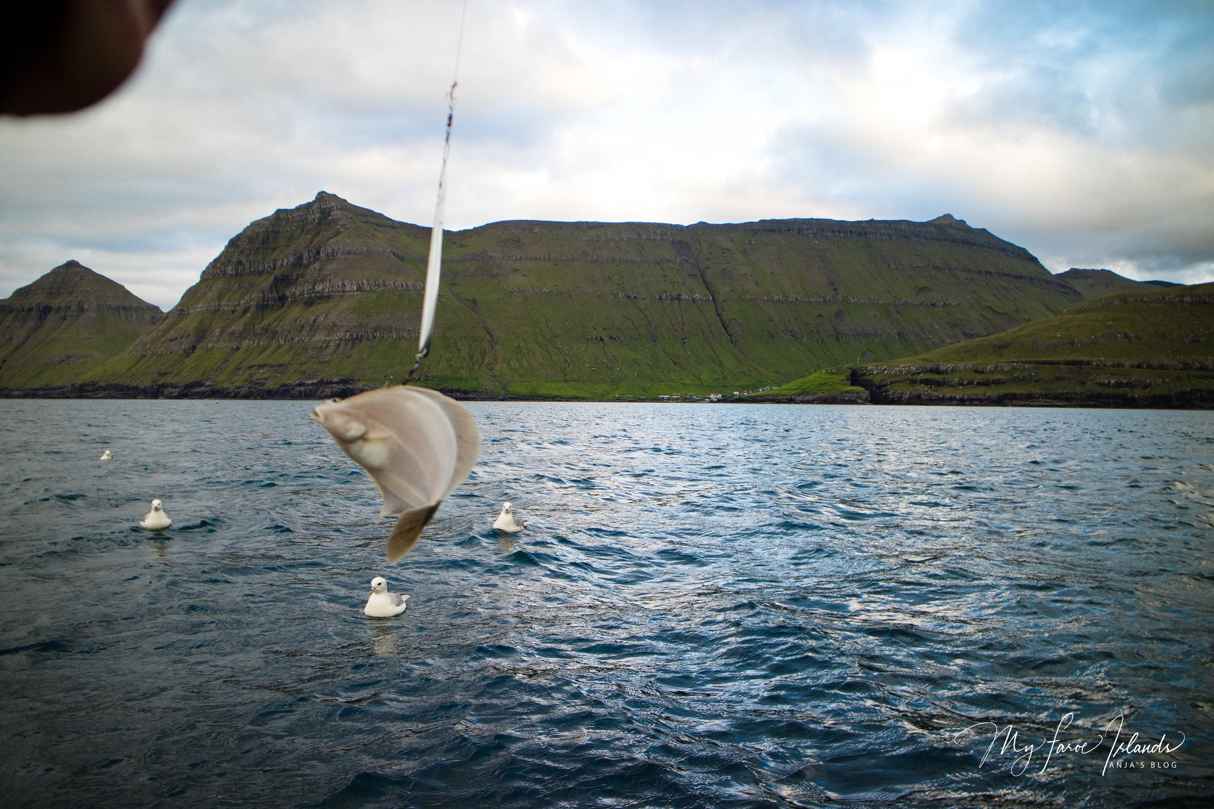 Catch 1 © My Faroe Islands, Anja Mazuhn  (1 von 1).jpg