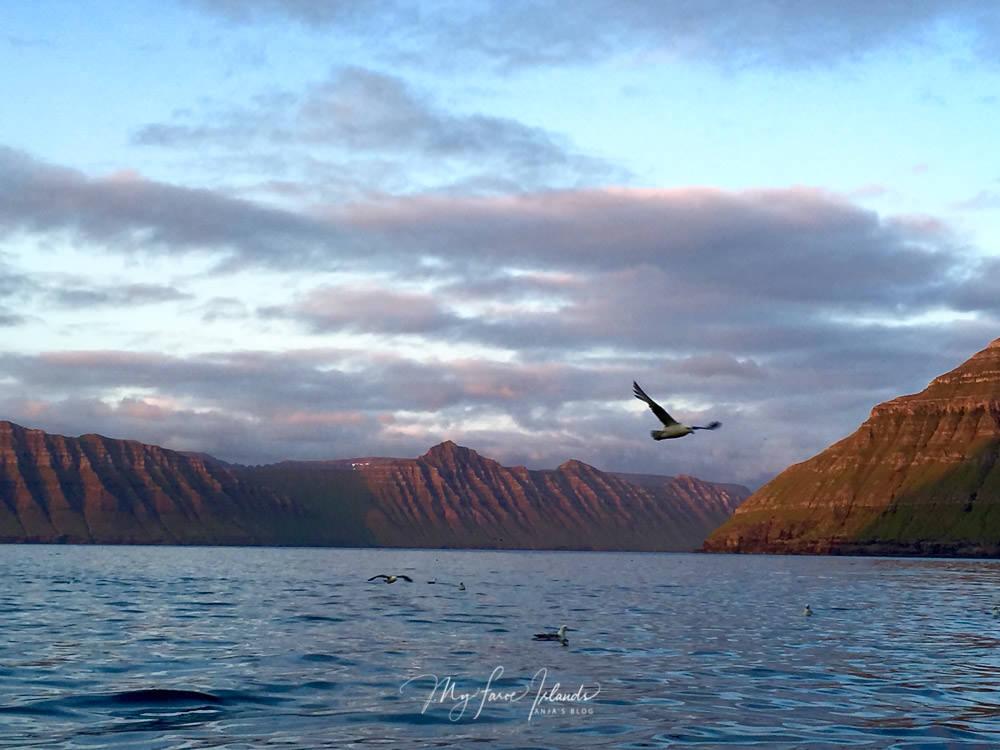 Adventures © My Faroe Islands, Anja Mazuhn  (1 von 1).jpg