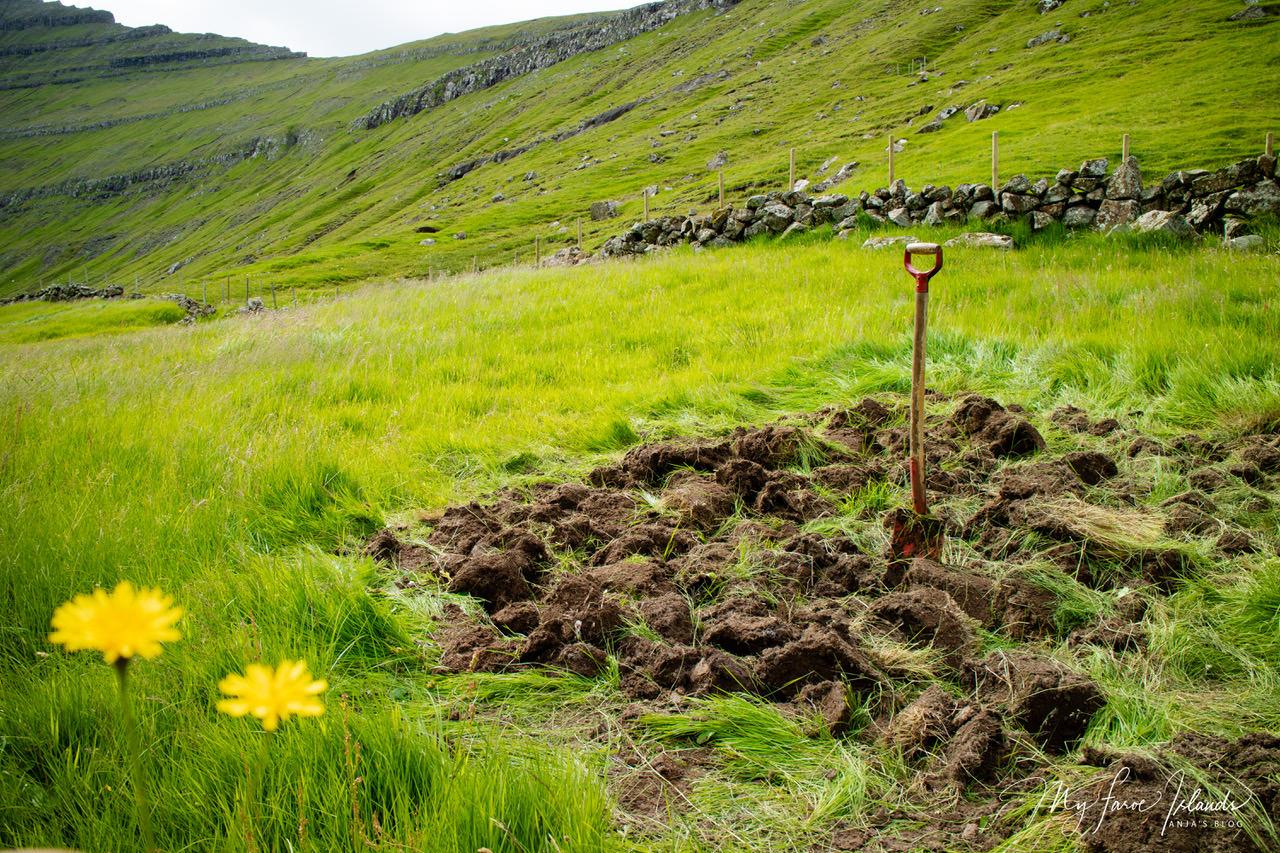 field_myfaroeislands.jpeg