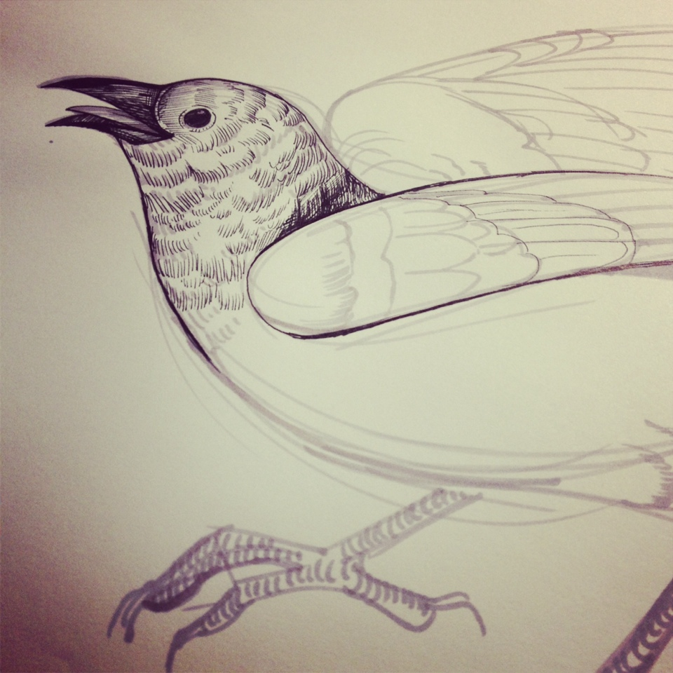 crow-study.jpg