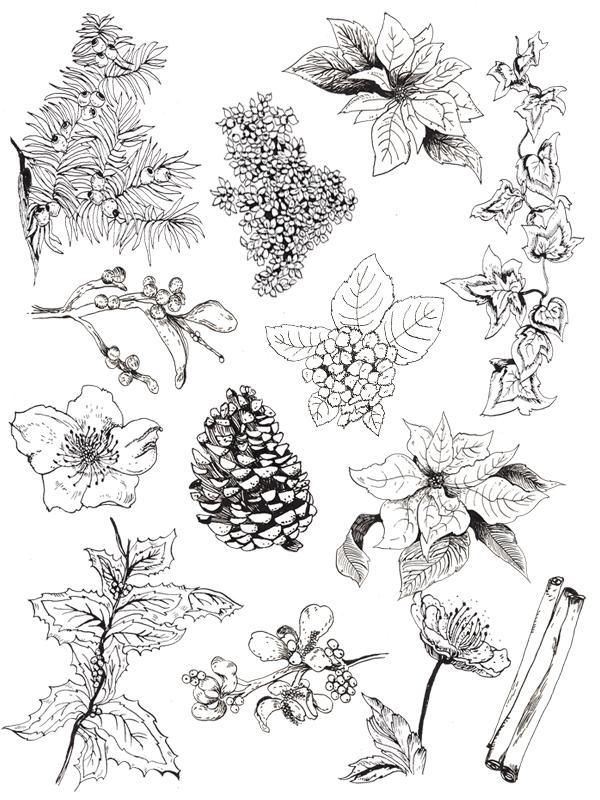 winter-foliage