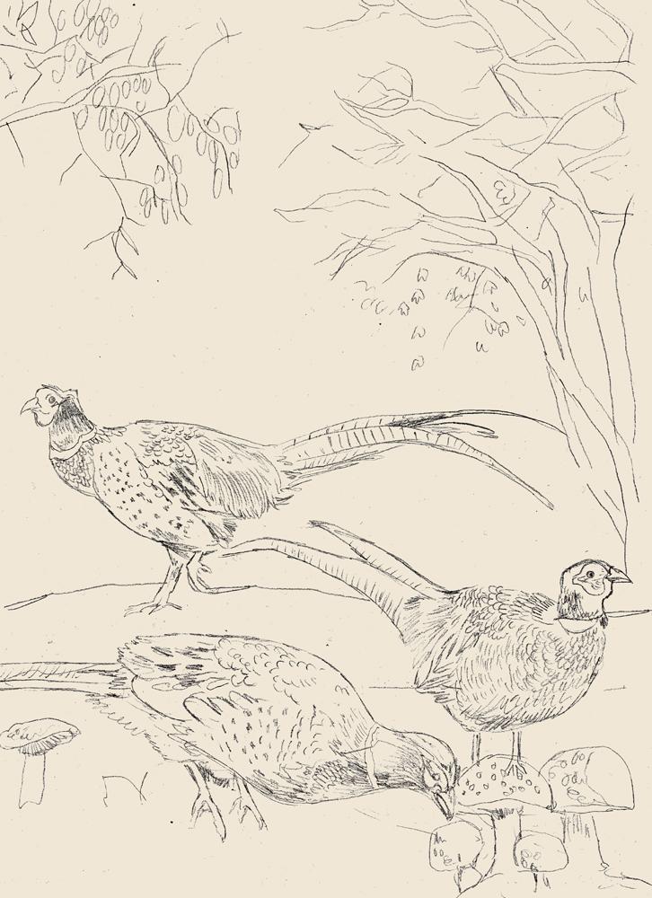 rubys-pheasant-sketch