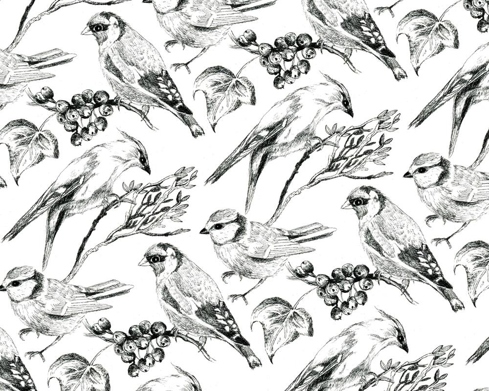 birds-in-the-woods