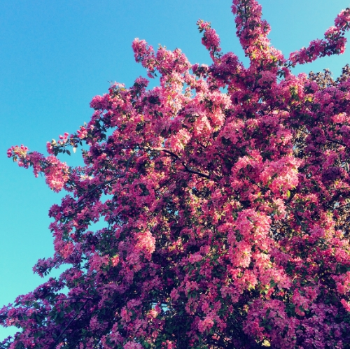 On  Instagram , I was admiring the many wonders of Spring blooms.