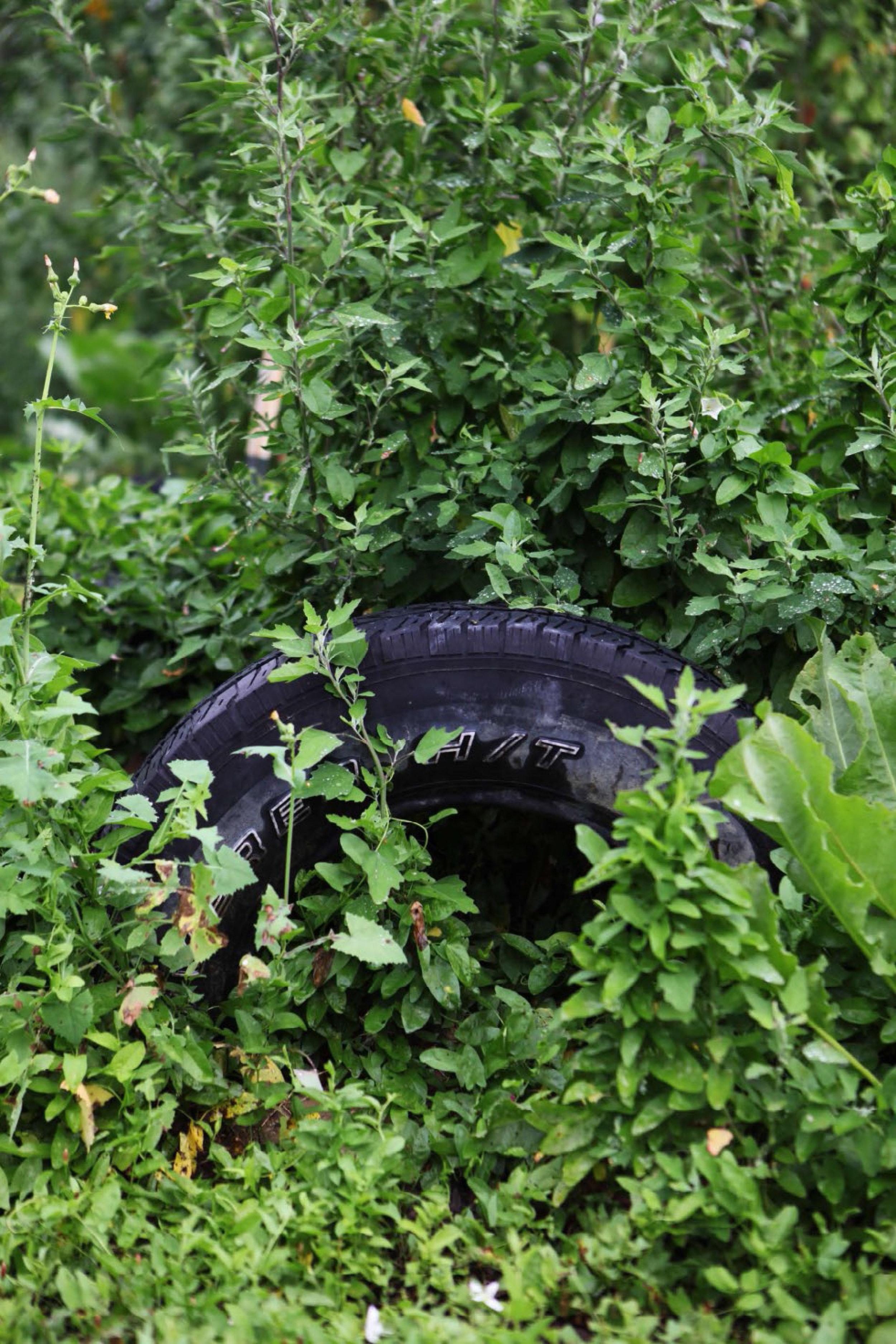 Tire in a Community Farm, Detroit