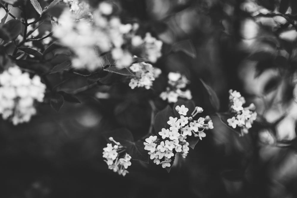 Spring15-32.jpg