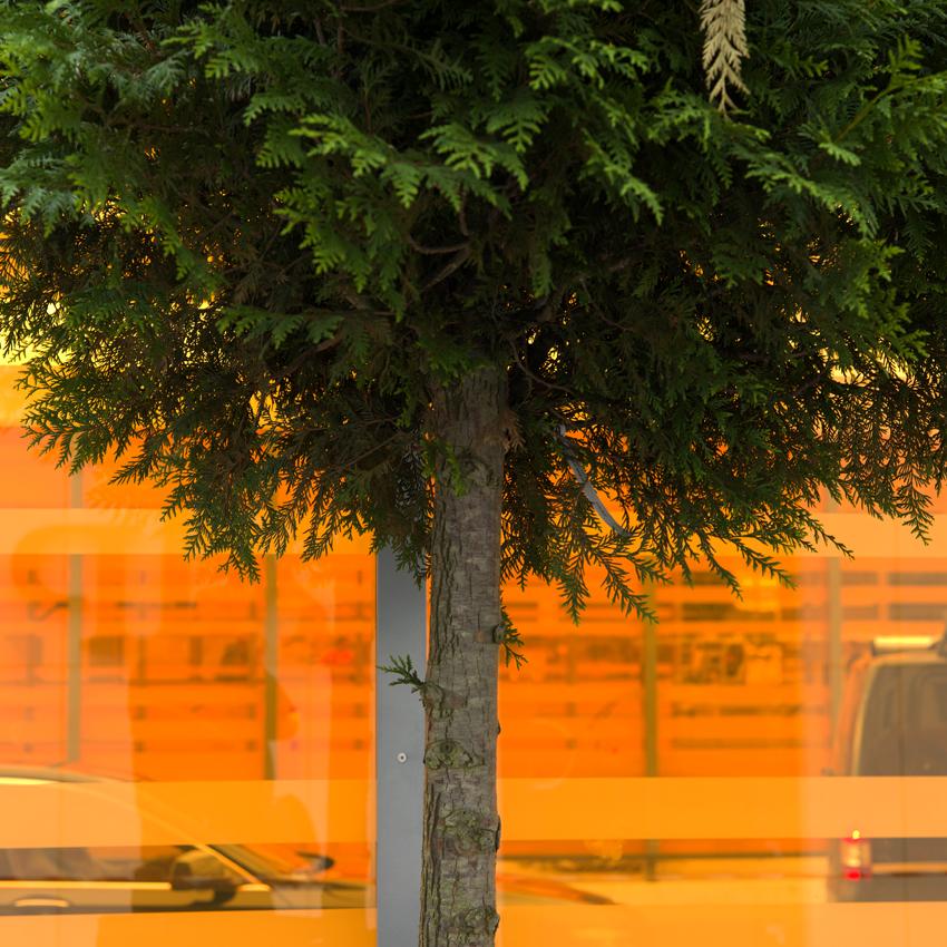 urban natur1.jpg