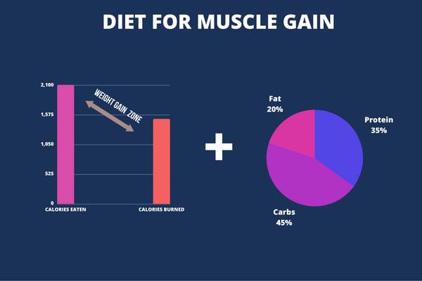 beginner weight lifting