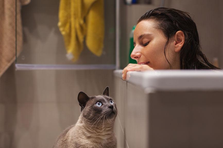 joint custody of pets