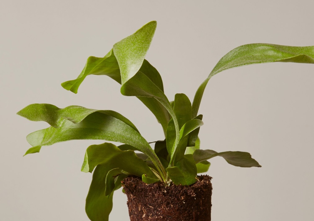 12 Cheap Indoor Plants & Low Maintenance Plants You Can Buy