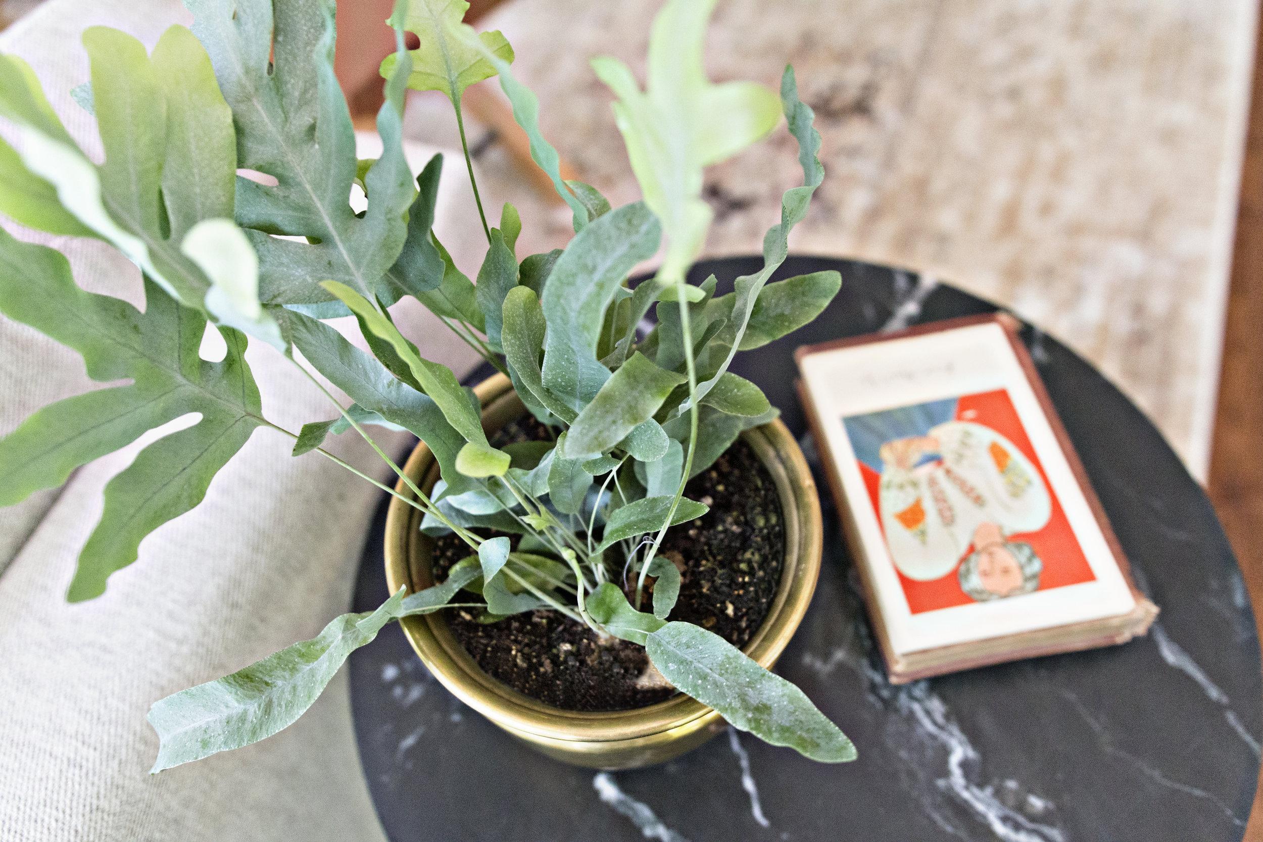 CLIENT UT PLANT.jpg