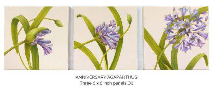 anniversary+agapanthus.png