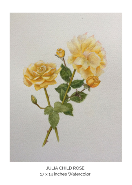 Julia Child Rose.png