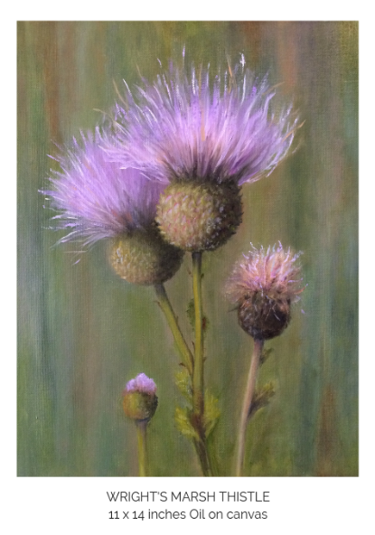Wright's Marsh Thistle.png