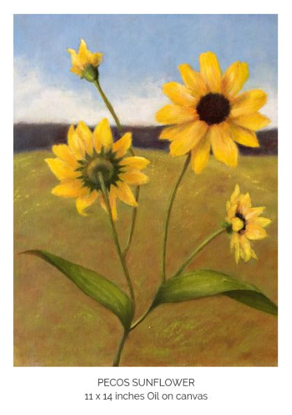 Pecos Sunflower.png