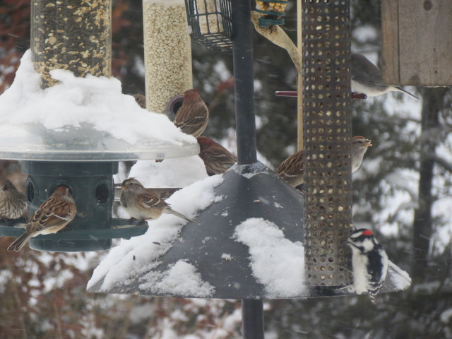 Also hoping our feeders are busier than this!! With the snow & cold temperatures, keep your feeders filled!! The birds will be looking for easily accessible food!