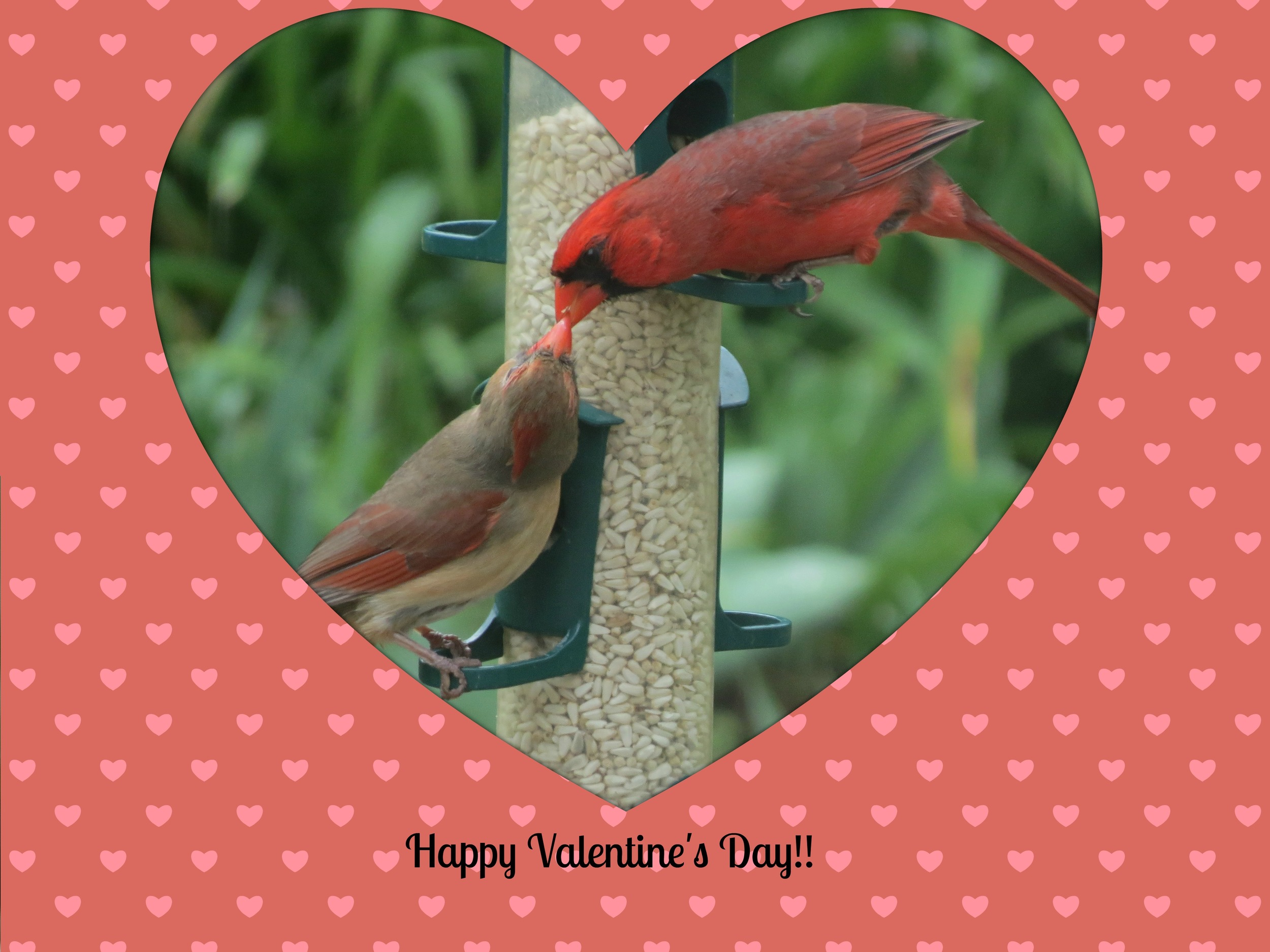 A favourite pair in our garden - Beautiful Northern Cardinals!!