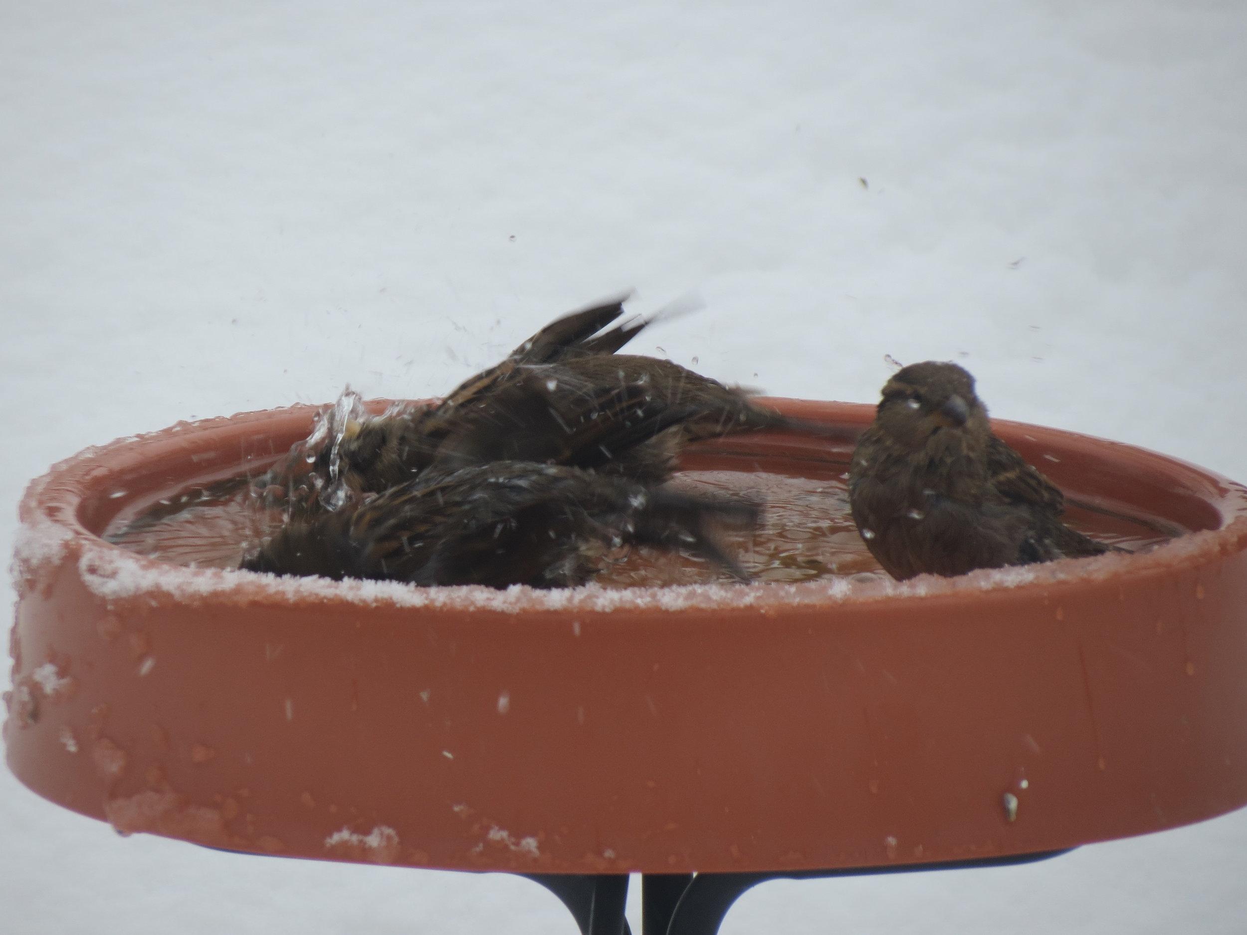 Heated Birdbath in our Garden!