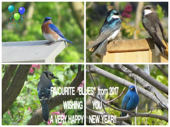 2017 BLUES 2.png