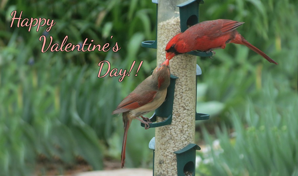 Picture+707 valentine's day.jpg