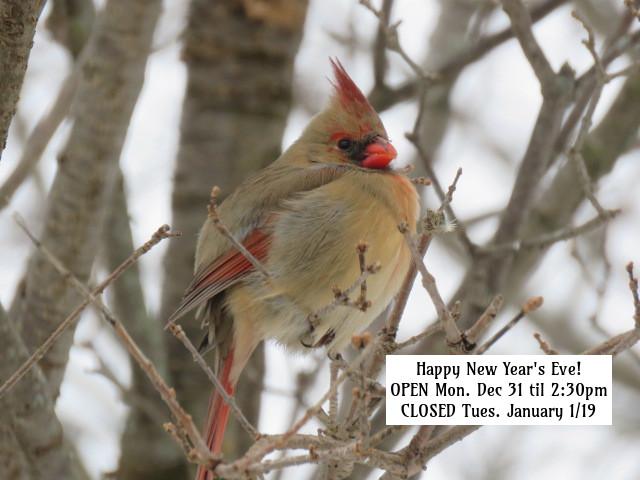 NYE 2018 2 F cardinal.jpg