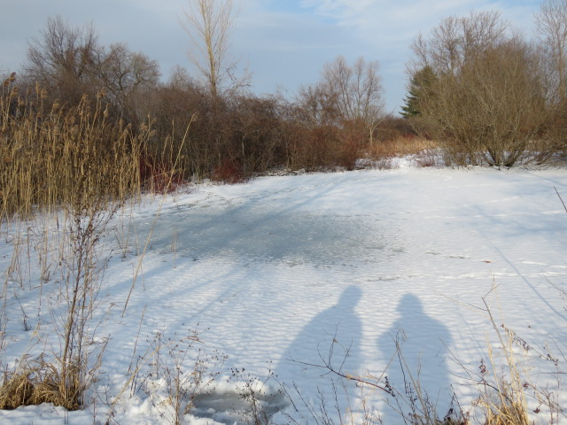 """""""On frozen pond""""….on a plus 9C day! February 3 2019"""