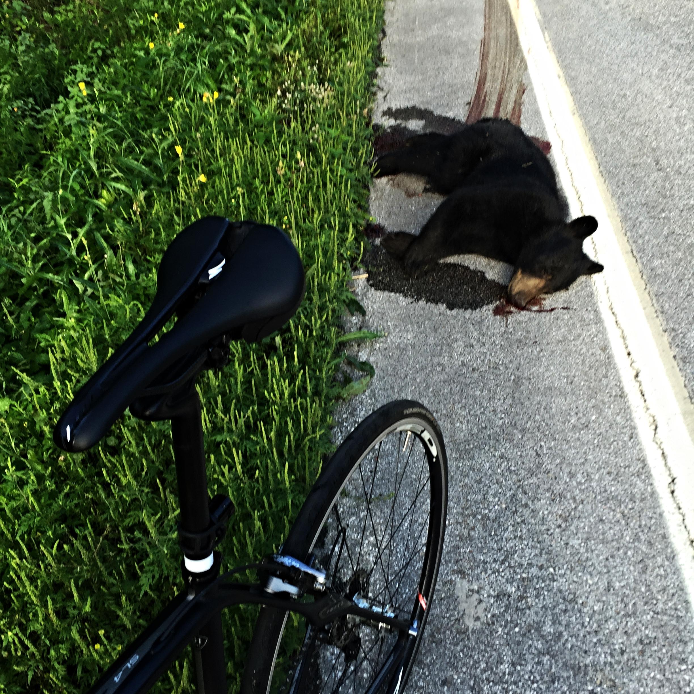 Road Kill. VT