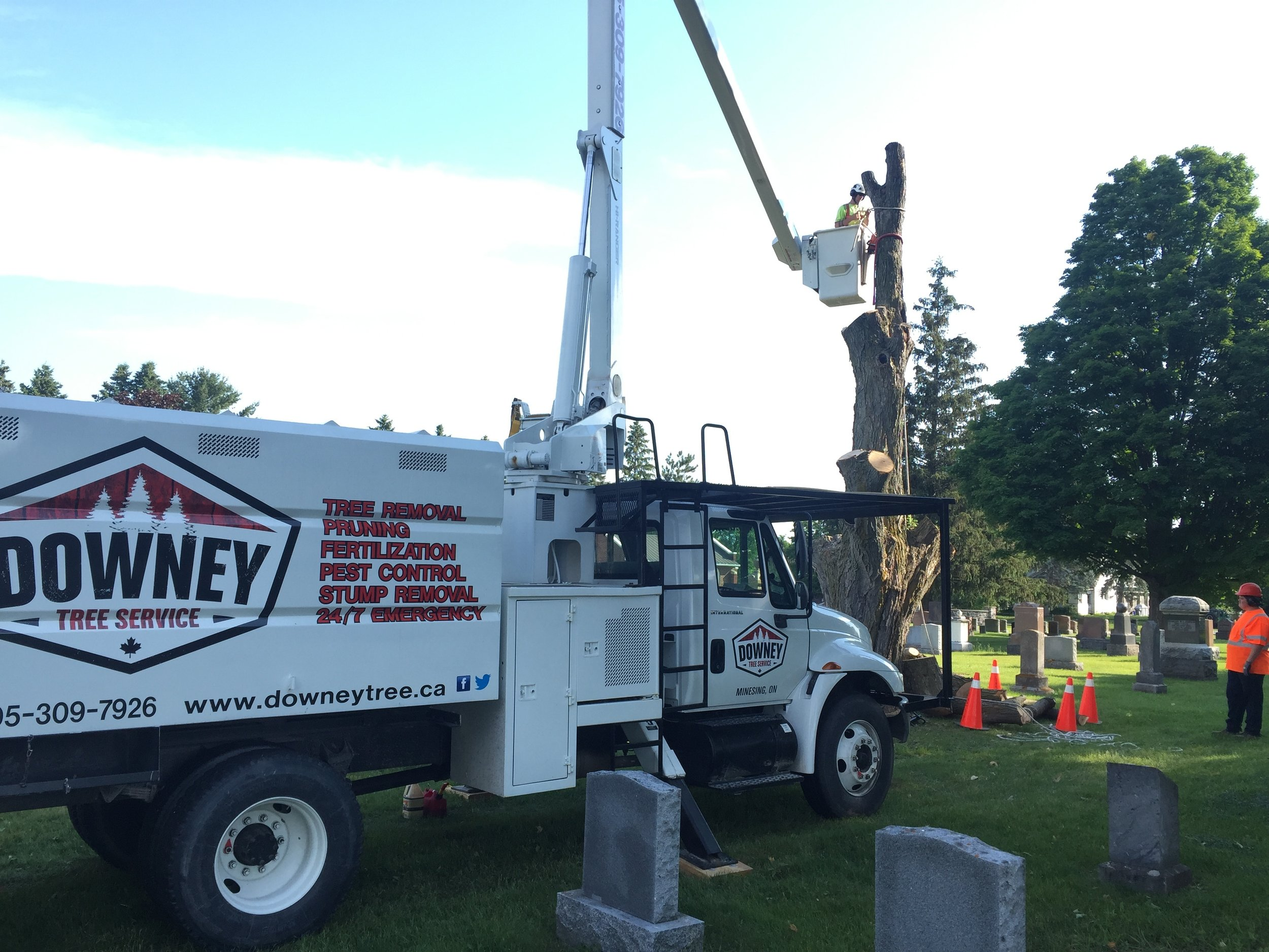 The last stages of a sugar maple removal in the Minesing Union Cemetary .